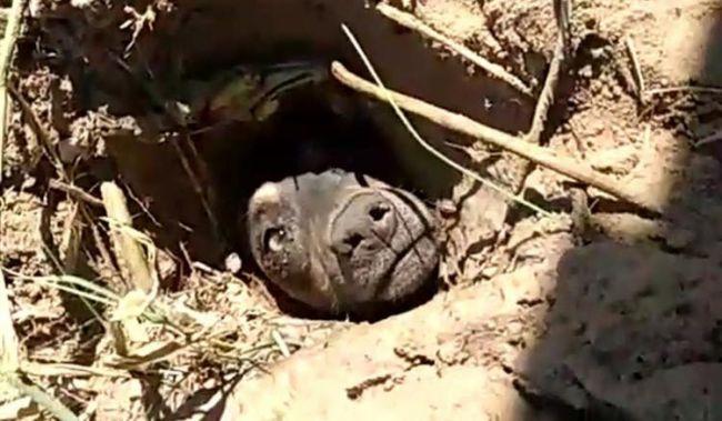 cachorro enterrado